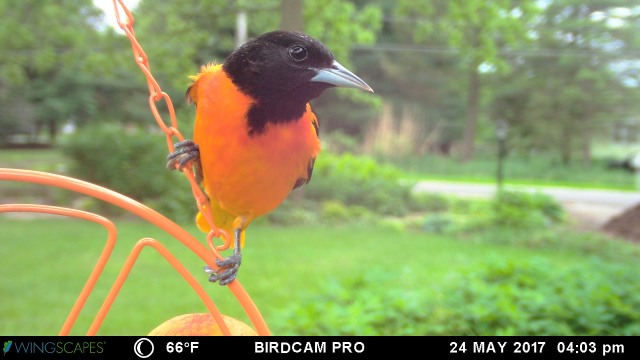 WINGSCAPES BIRDCAM PRO CAMERA